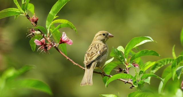 Méditer pour entendre le chant des oiseaux